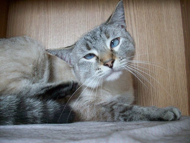 6 Ways You May Be Endangering Your Cat Cats Warrior Cats Books Cat Whiskers