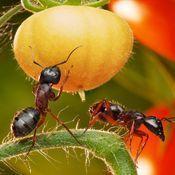 fiche pratique lutter contre les fourmis dans le jardin. Black Bedroom Furniture Sets. Home Design Ideas