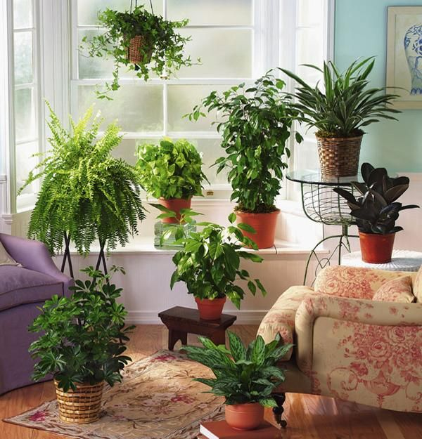 Fern Decor for Room Windows Facing North and Interiors Lacking ...