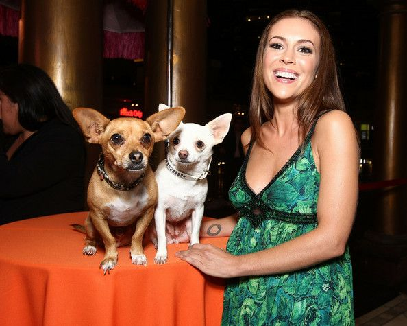 18 Celebrities With Chihuahuas Beverly Hills Chihuahua