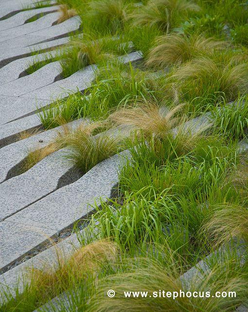 Carex Garden Design By Carolyn Mullet Green Pinterest