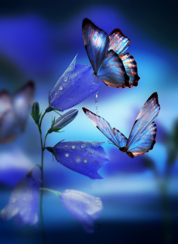 f940be73255a2 Photo - Google+   beautiful things   Butterfly, Blue butterfly ...