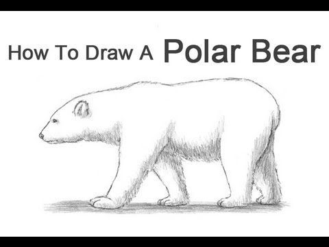 How To Draw A Polar Bear Youtube Drawing For
