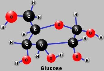 Glucosa Biología Y Ciencia