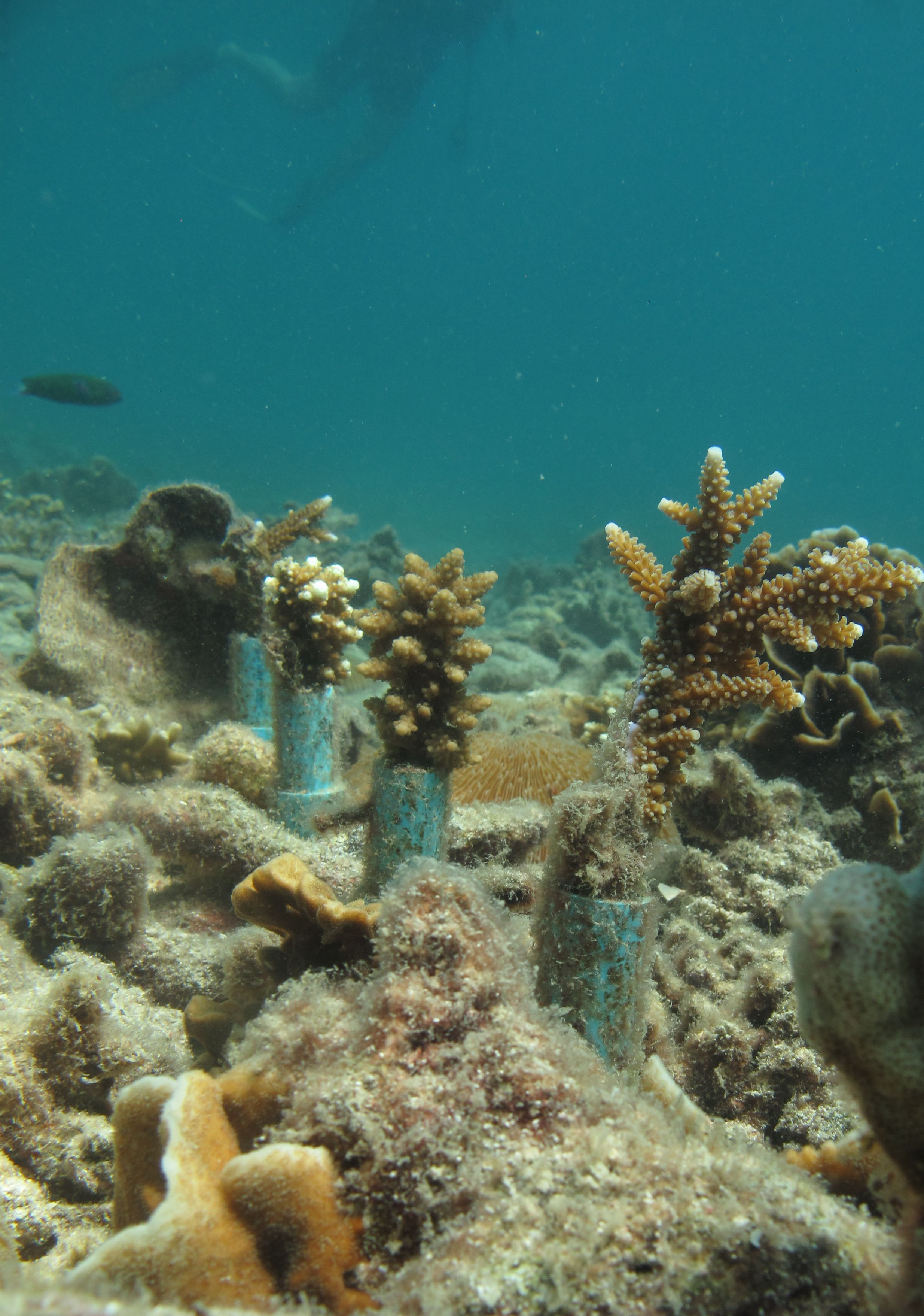 Some Of The Pvc Coral Nurseries Put Down As Part Of A