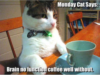 Monday Cat Quotes Cute Quote Cat Coffee Monday Days Of The Week Coffee Quotes Funny Cute Cats Monday Cat Cats