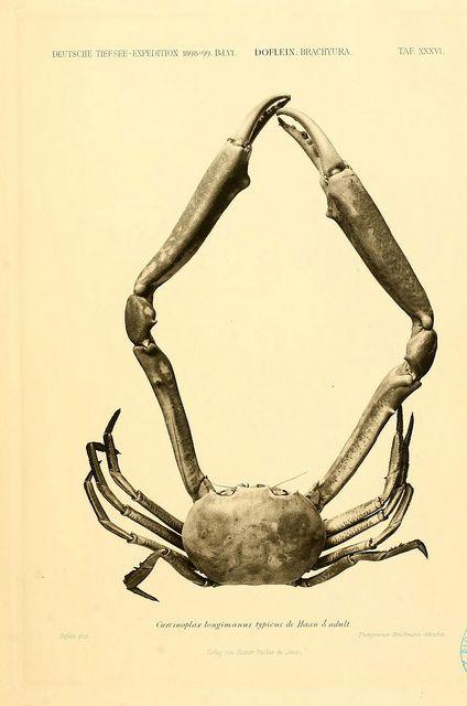 """Wissenschaftliche Ergebnisse der Deutschen Tiefsee-Expedition auf dem Dampfer """"Valdivia"""" 1898-1899. bd.6. Atlas  Jena,G. Fischer,1902-40."""