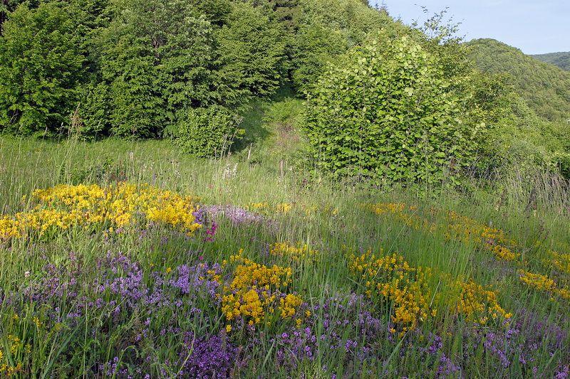 The Great Meadow or Nagy Mező wild flowers, karst
