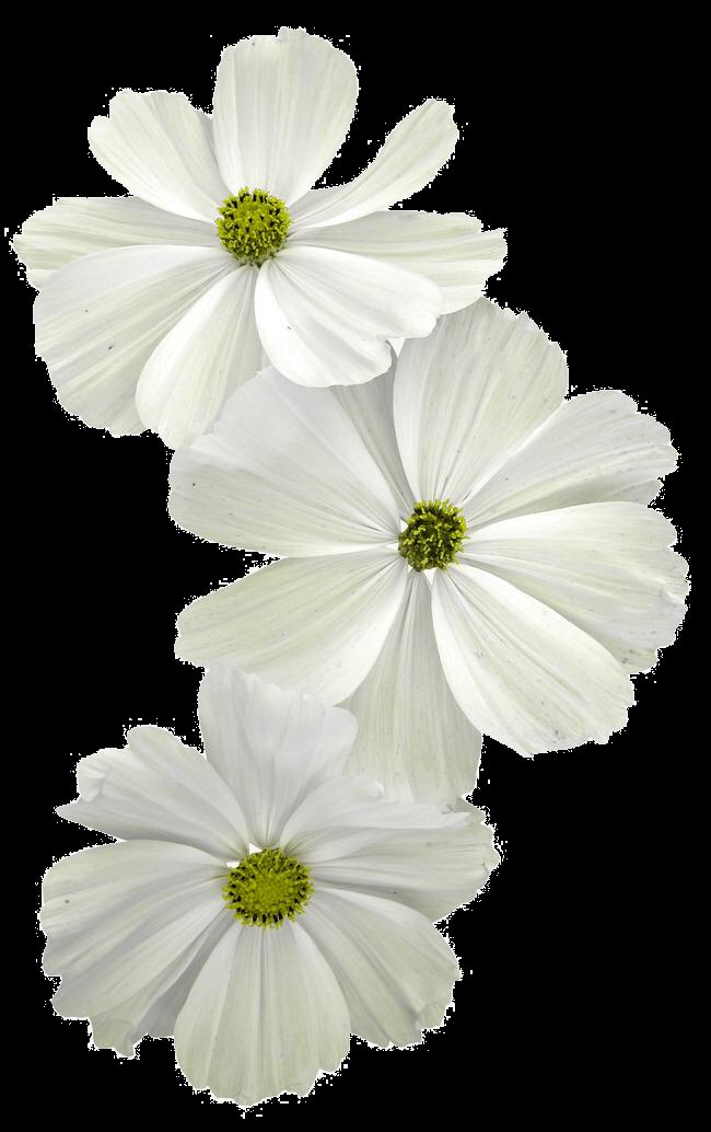 ورد ابيض Flower Drawing White Flowers Pink Flowers