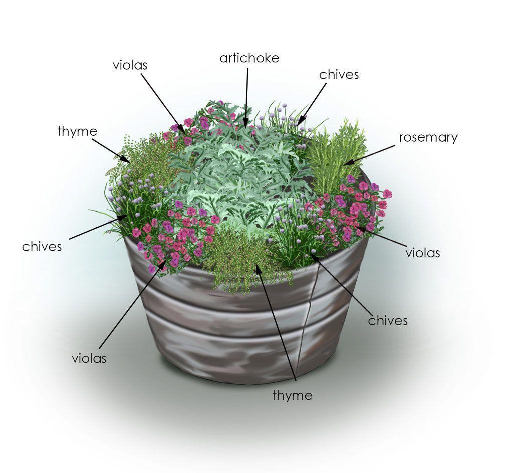 Herbs Artichoke Container Garden Bonnie Plants Container Herb Garden Herb Garden Pots Artichoke Plants