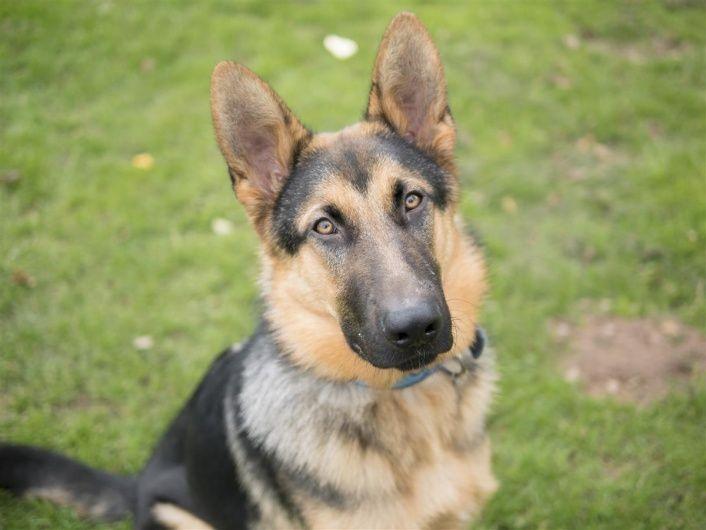 Franco Blue Cross Pets Blue Cross Animals