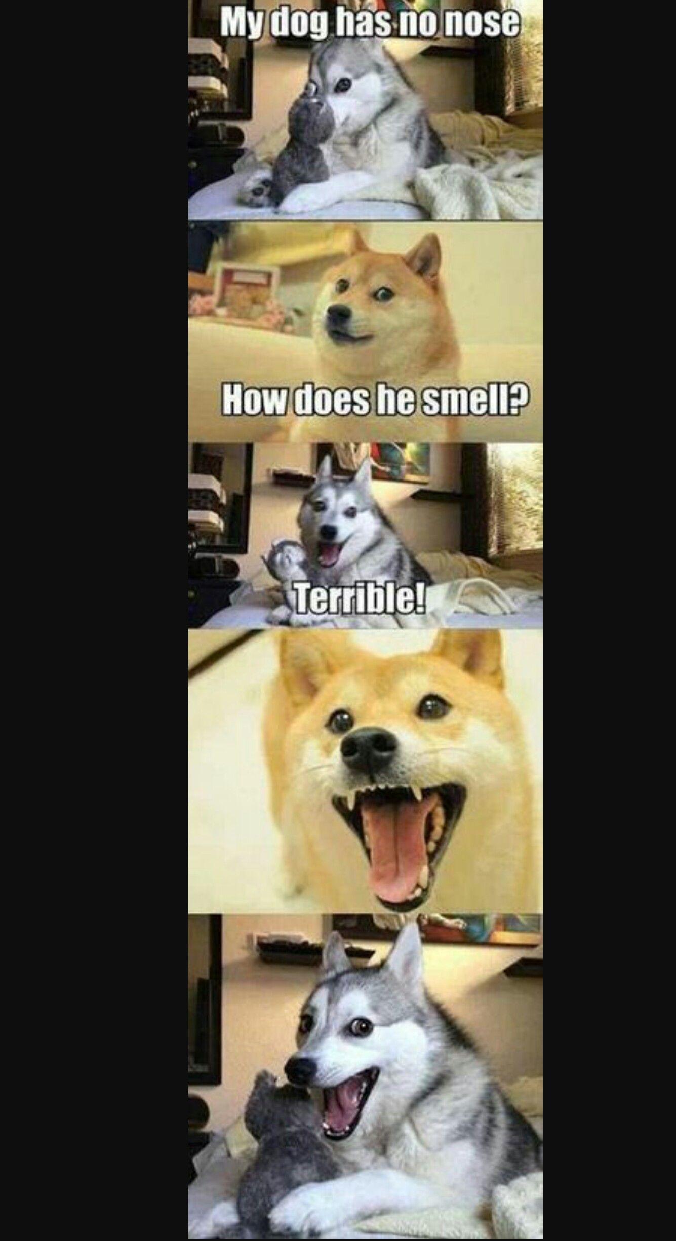 Bild von E•T•O auf FunnyStuff Hund witze, Tierwitze