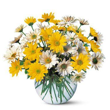 daisy bouquet ideas - Bing Images