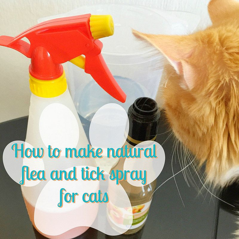 How to make natural flea and tick spray for cats and dogs #applecidervinegar #green #DIY
