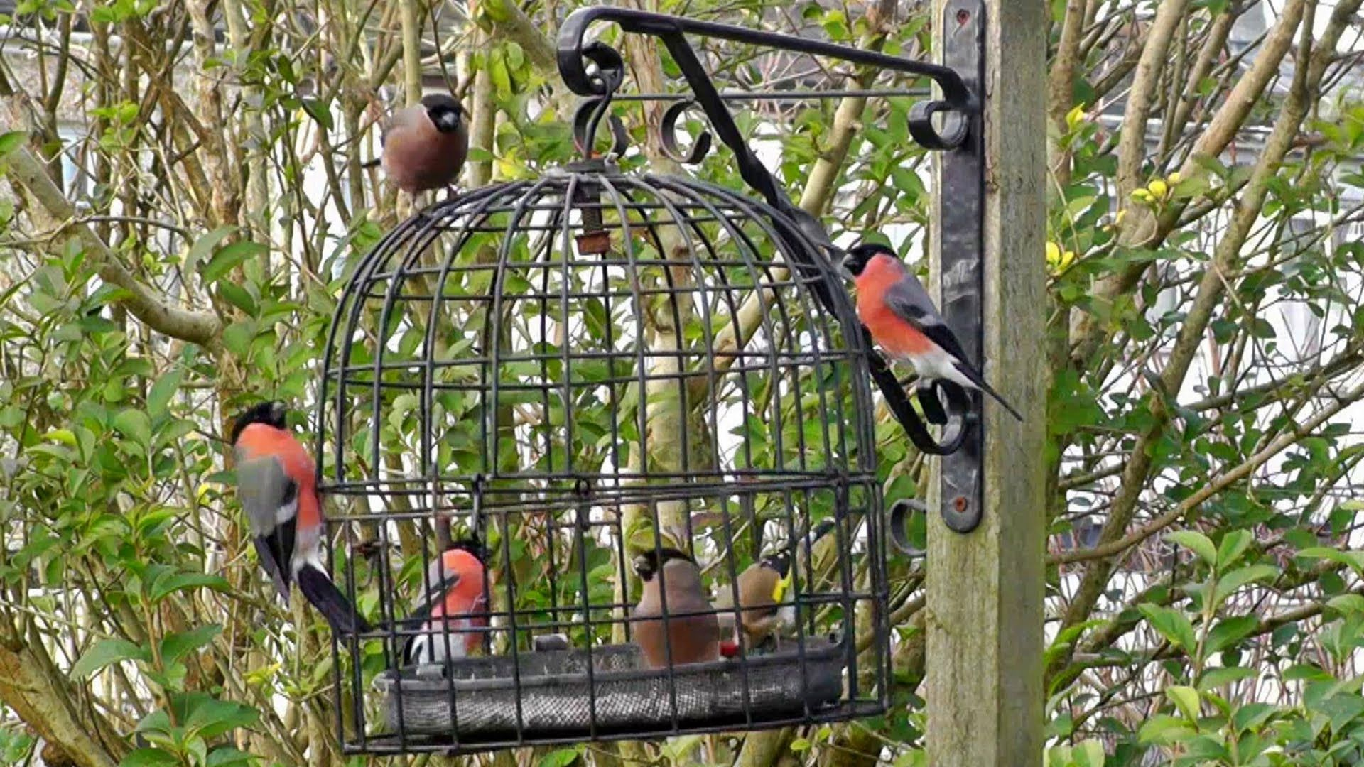 The Bird Cage Anti Squirrel And Pigeon Proof Bird Feeder Caged Bird Feeders Squirrel Proof Bird Feeders Hanging Bird Feeders