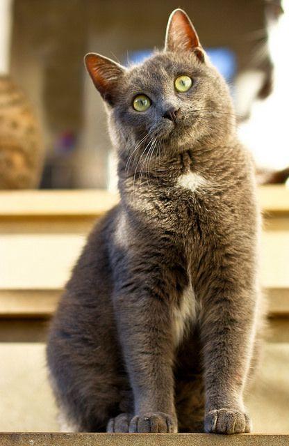 Russian Kitty Lady