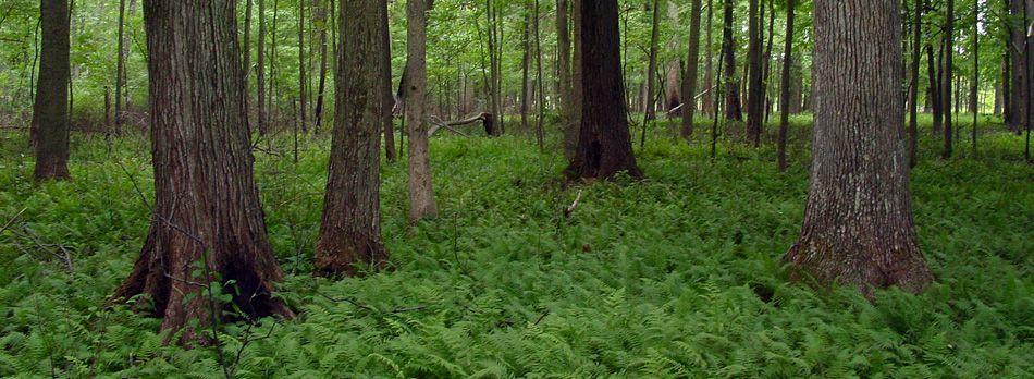 Big OaksNational Wildlife Refuge | Indiana