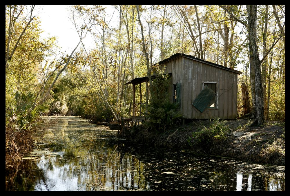 Bayou Shack With Images Louisiana Bayou Louisiana Swamp Bayou