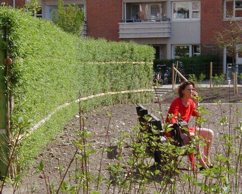 Palissades v g tales   Les  crans Verts   Living FencePlantCourtPalissades v g tales   Les  crans Verts   Living fence   Palissade  . Living Willow Fence Panels. Home Design Ideas