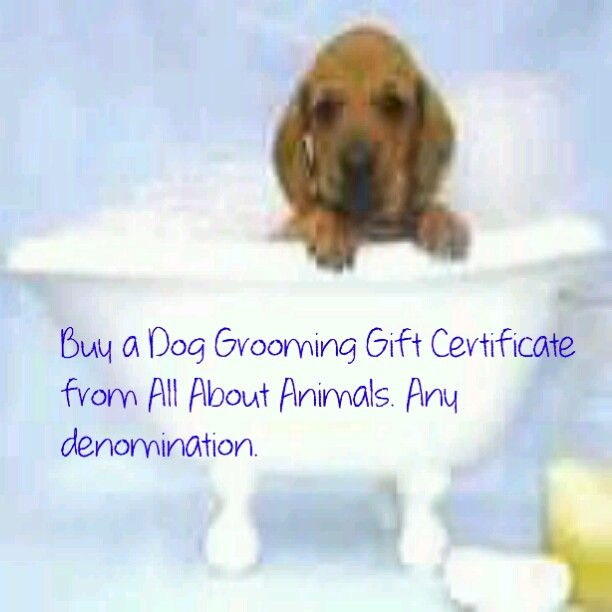 Dog Grooming Gift Certificate Dog grooming, Buy a dog, Dogs
