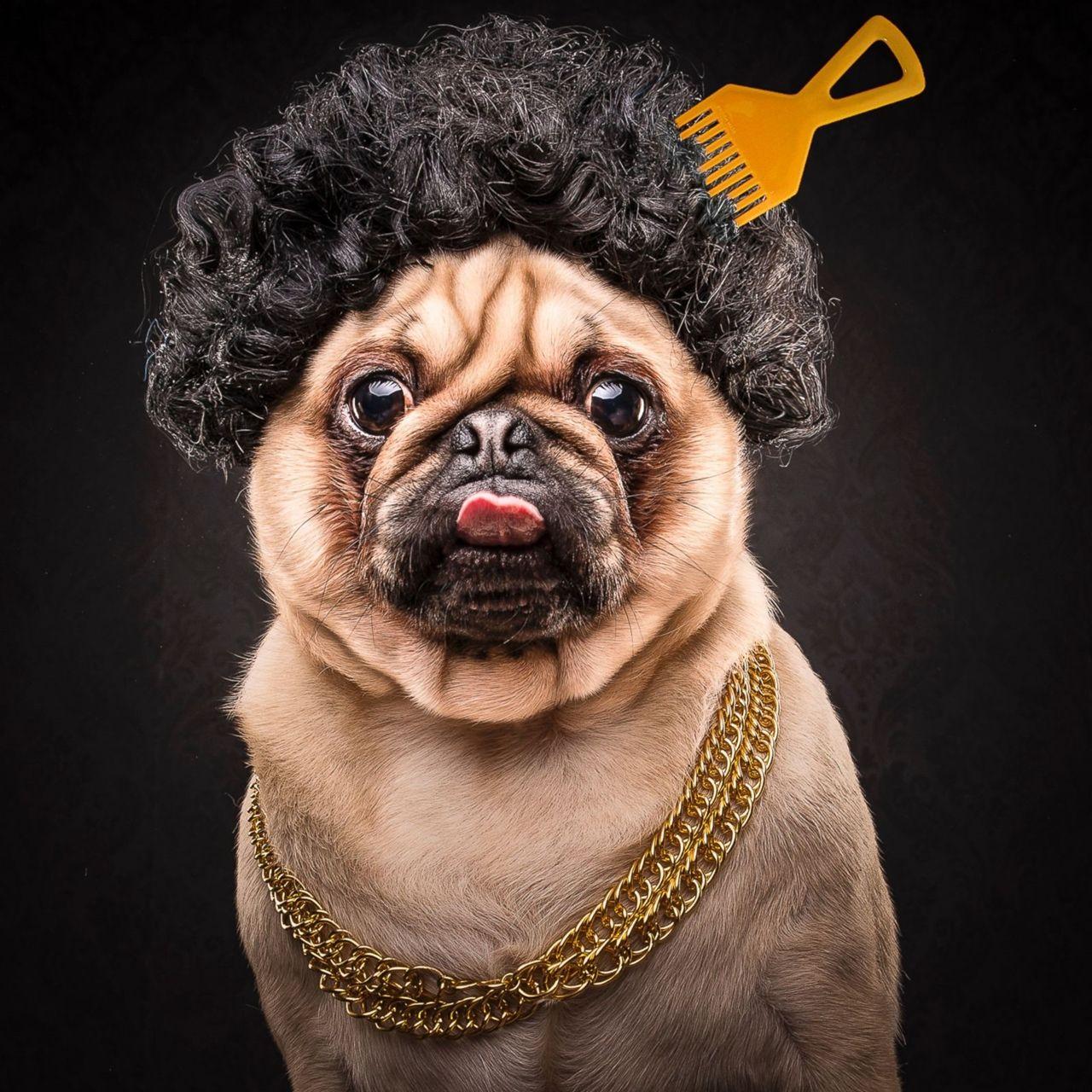 Нового год, смешные картинки с изображением собаки