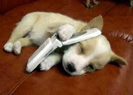 An American Animal Hospital Assoc. poll found that 33% of dog owners admit to talking to their dogs on the phone and leaving answering machine messages for them while away