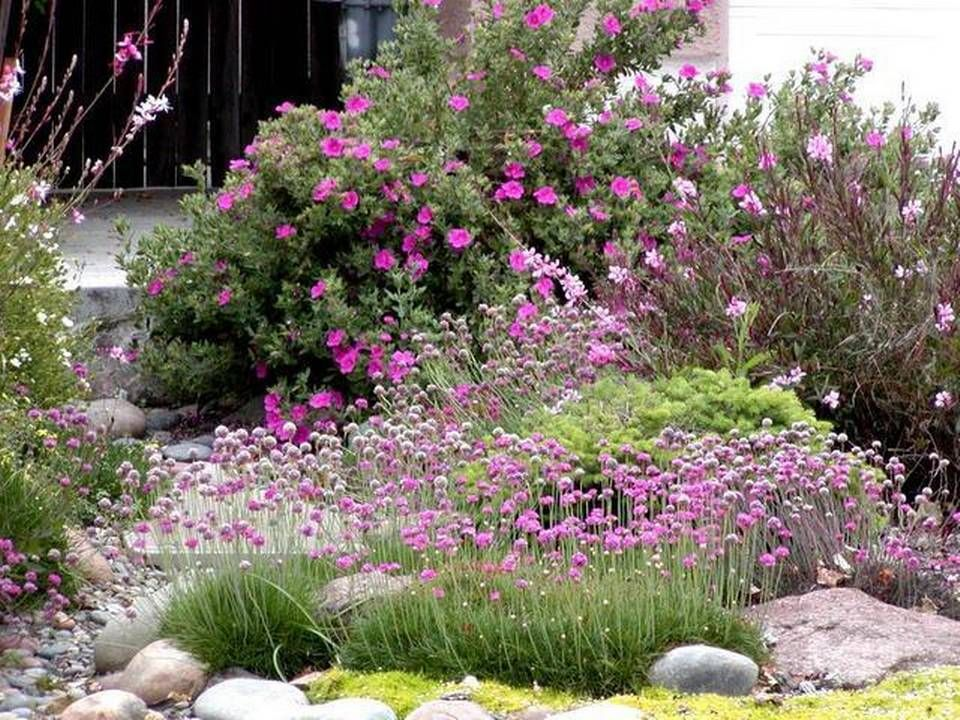 California native plants mix with other drought tolerant for Landscaping without plants