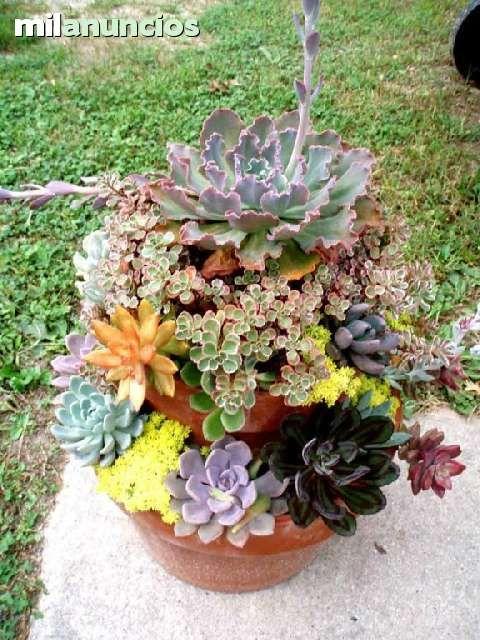 Suculentas crasas decoracion jardin foto 1 jardin for Arreglos de jardines con macetas