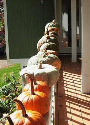 pretty pumpkins all in a row