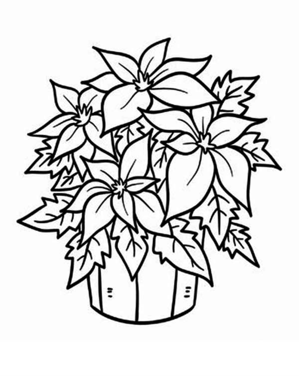 poinsetta coloring pages - photo#11