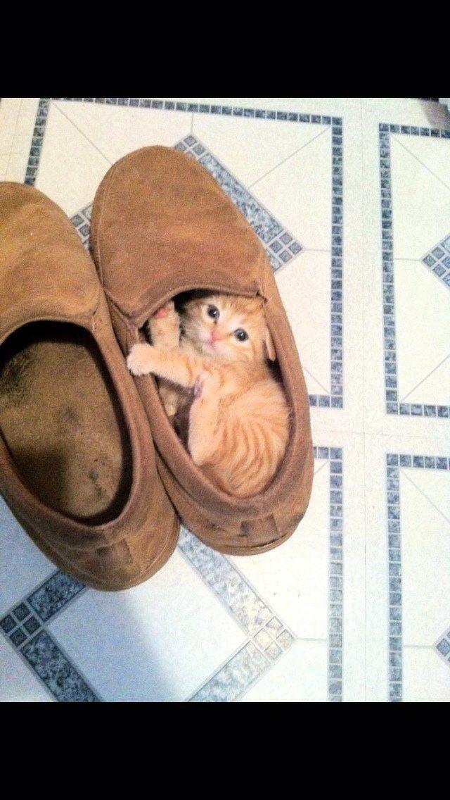 <b>Bien, iba a sentarme aquí, gatito, pero ESTÁ BIEN.</b>