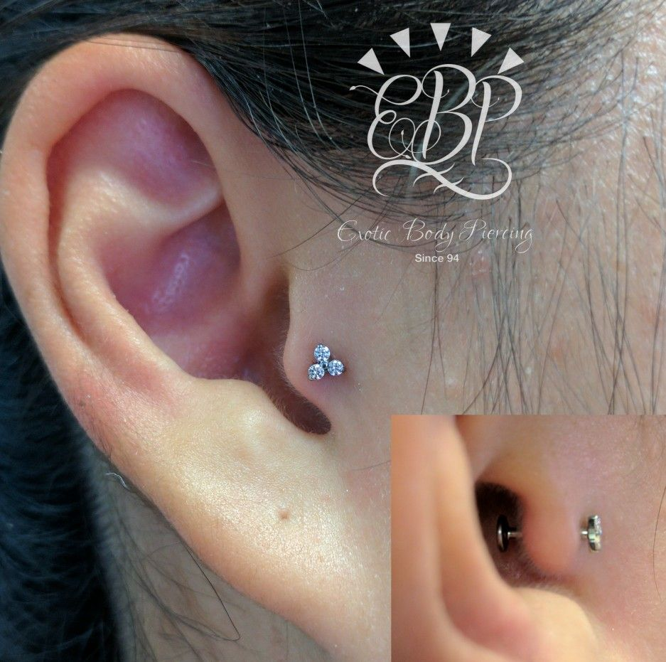 tragus piercing with neometal trinity pierced exoticbodypiercing perth. Black Bedroom Furniture Sets. Home Design Ideas