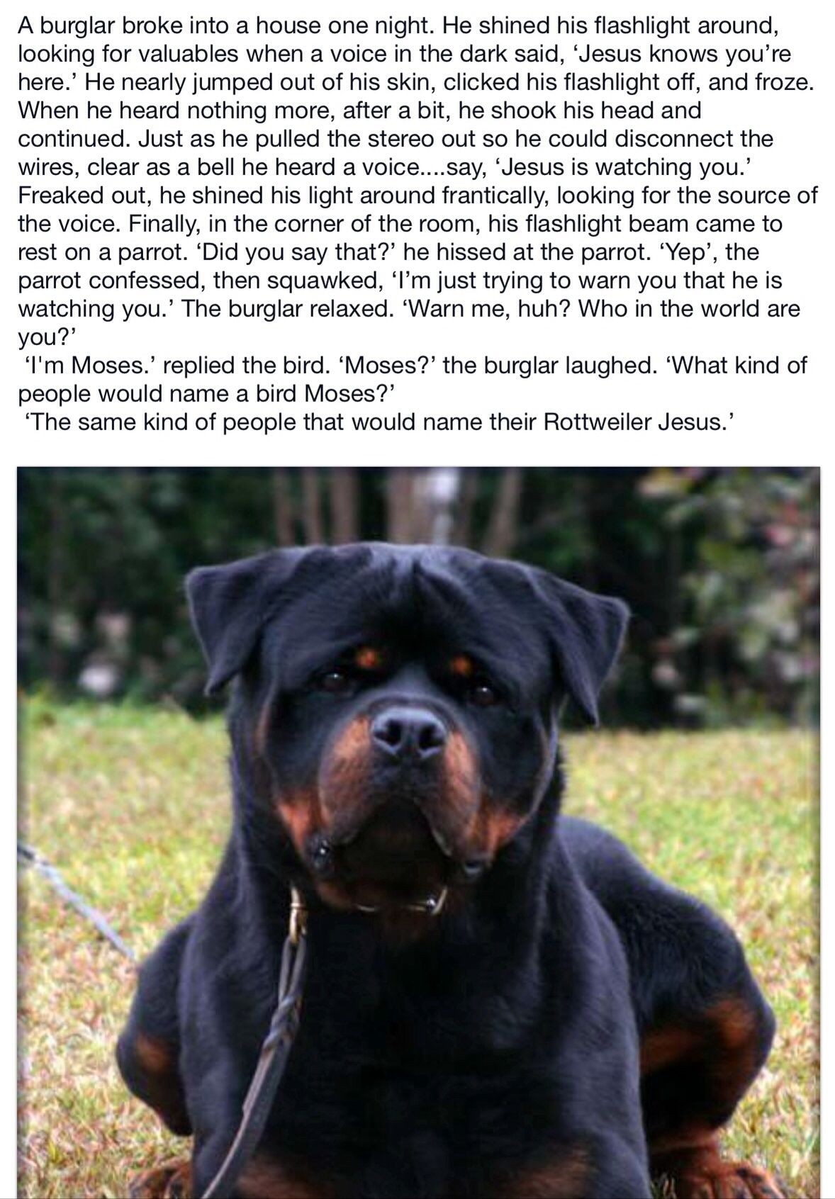 Pin By Carol Morgan On Funnies Rottweiler Dog Rottweiler Lovers Rottweiler