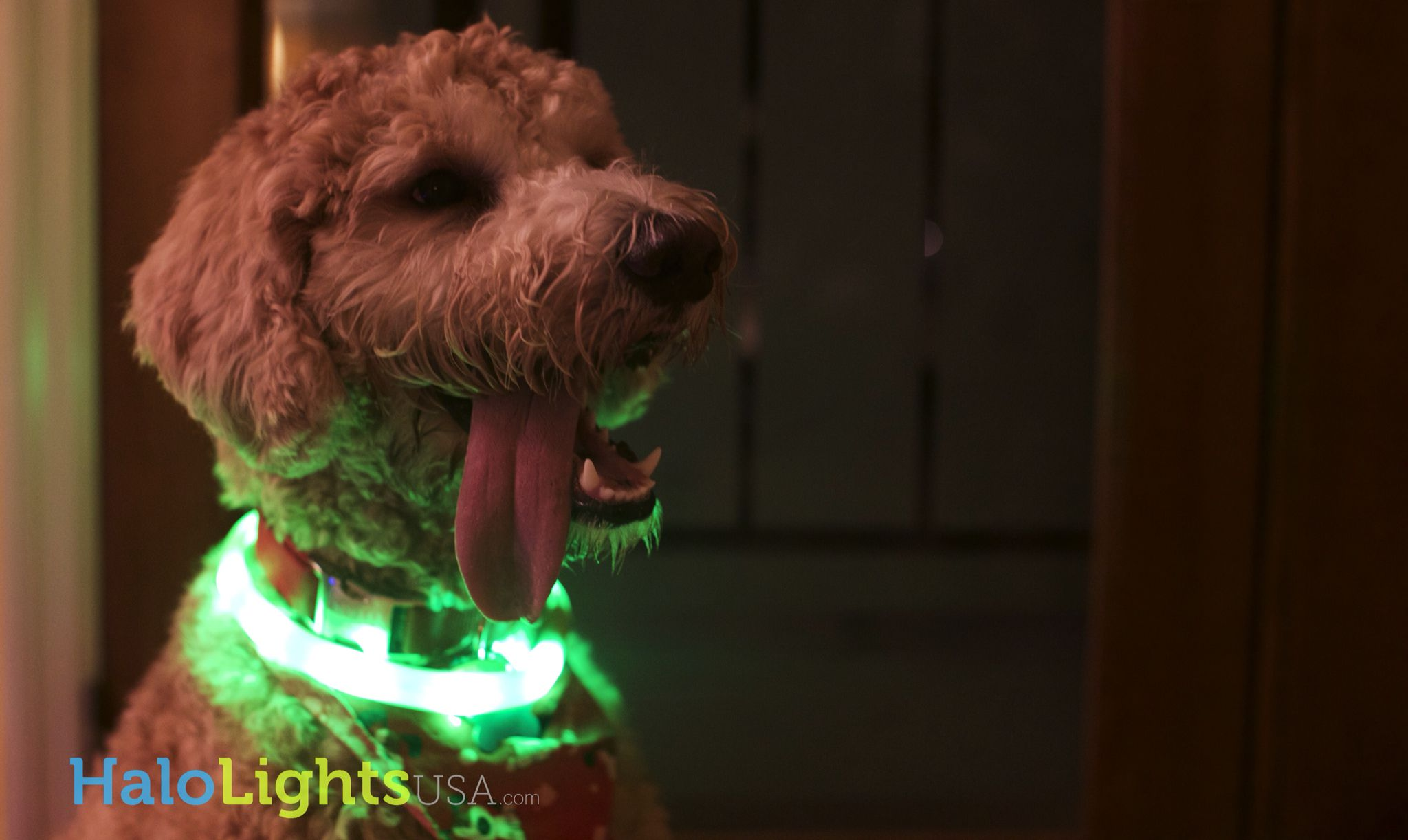 USB rechargeable LED collars! Enchanting safety and