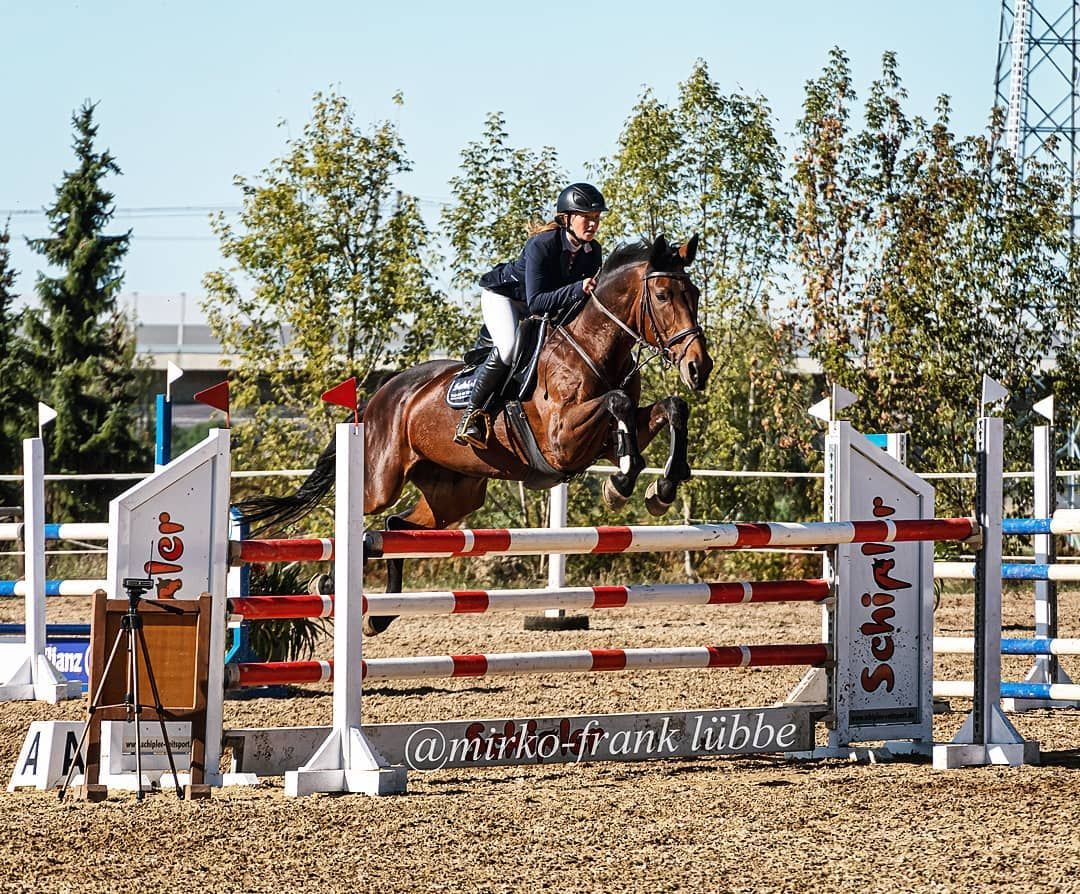 #horse #horselove #pretty #world_colors #picoftheday #myshot #ig_shotz #portrait #portraitphotography #animals #love #instadaily #equestrian #smile #instagood #ilovemyhorse #horseshow #instapic #equine #happy #equinephotography #equestrianlife #winner #equestrianlove #brownhorse #horsesofinstagram #jumping #beautiful #instapicture #powerfullgirls #horse #horselove #pretty #world_colors #picoftheday #myshot #ig_shotz #portrait #portraitphotography...