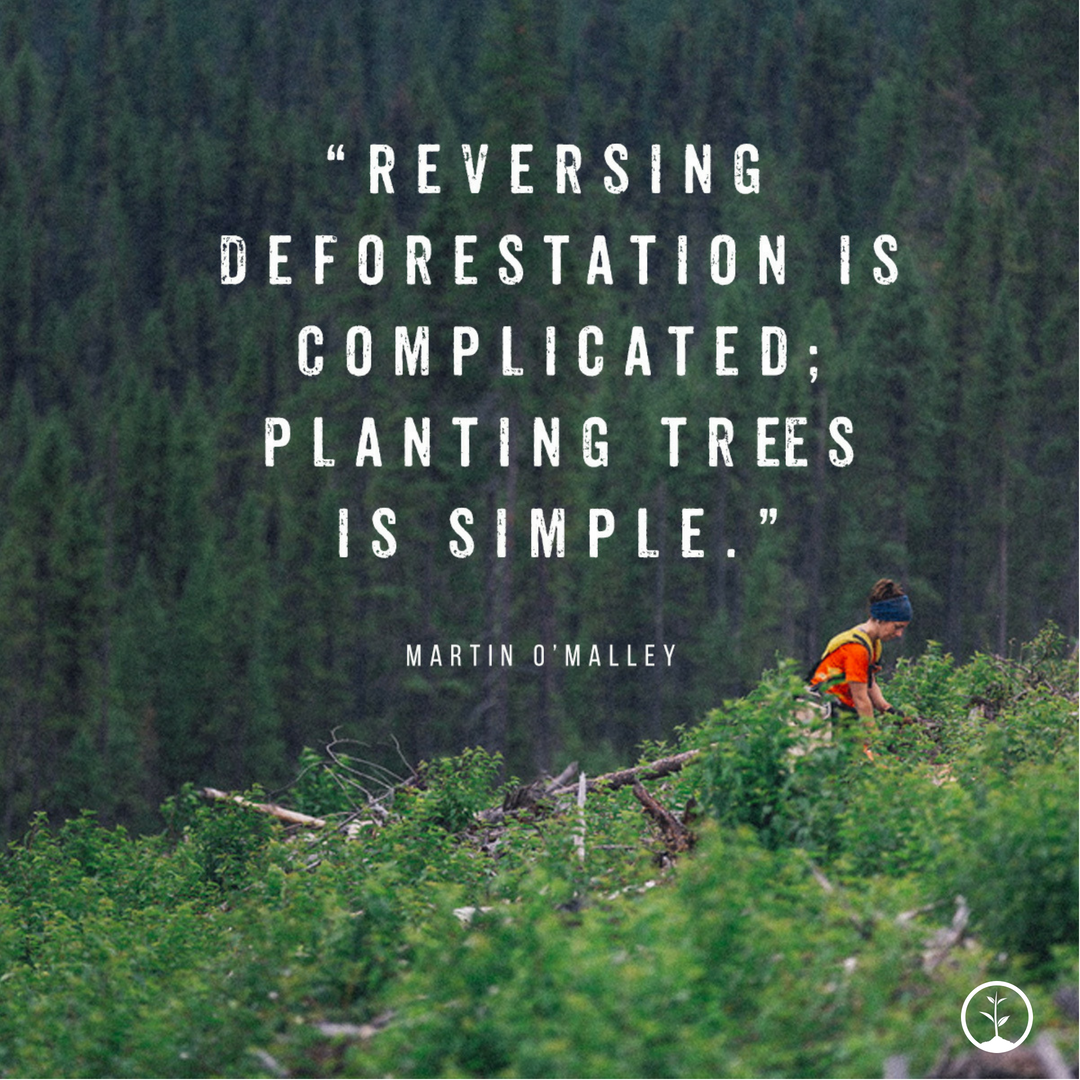 Reversing deforestation is complicated; planting trees is