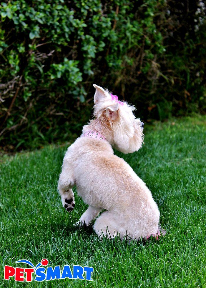 Refresh Your Pet For Spring With Petsmartgrooming Diy Pretend Pet Salon Your Pet Pets Pet Salon