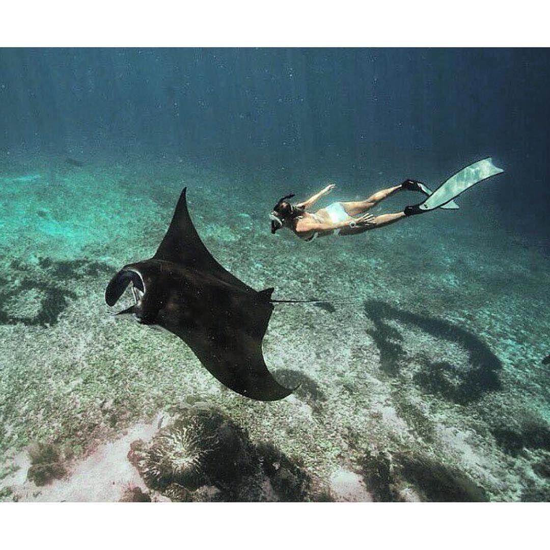 Diving With Mantas Komodo National Park Flores Island Indonesia