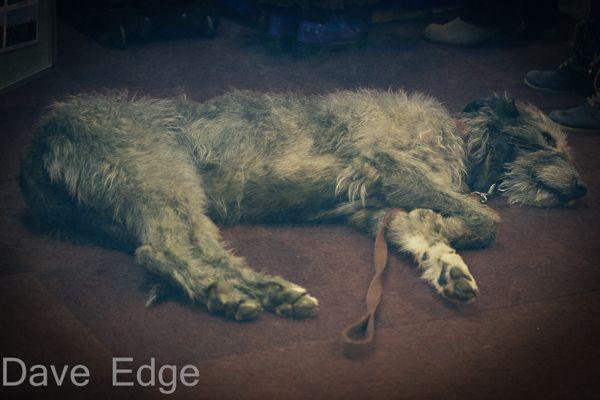 Irish Wolf Hound  Dogs by Dave Edge, via Behance