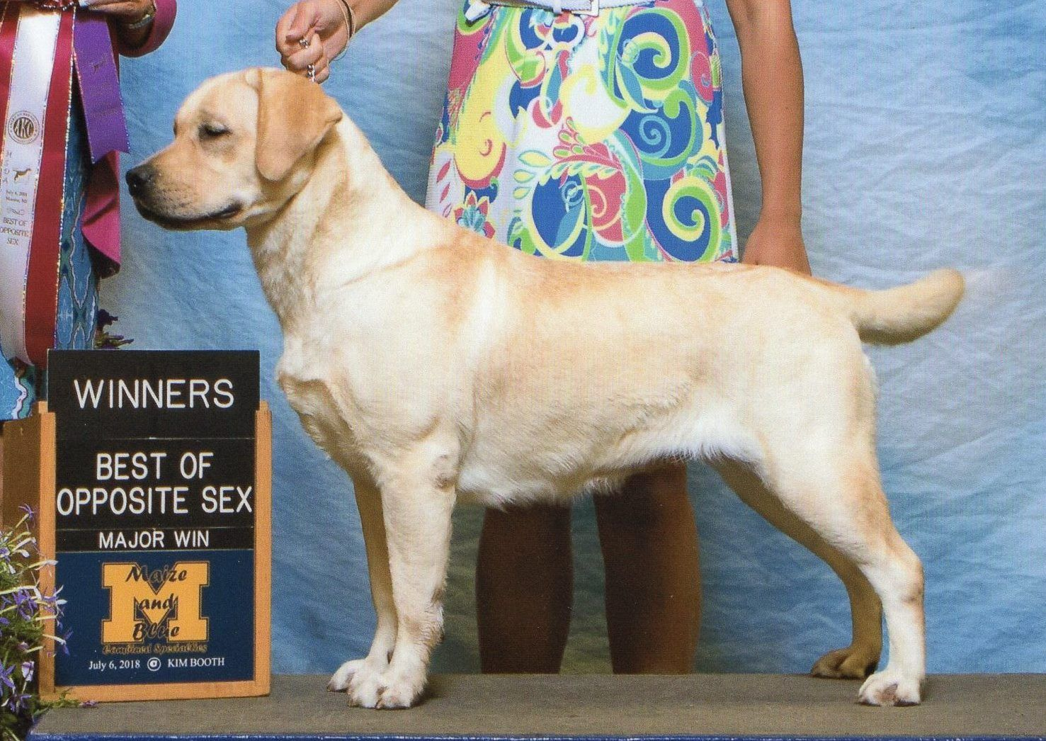 Dory S Debut To The Akc Conformation Championship Show Ring