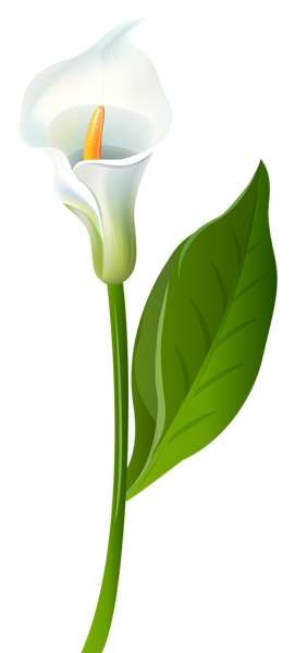 calla lily transparent png clip art image clipart pinterest rh pinterest com lily clipart free water lily clipart