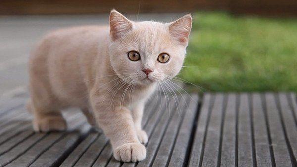 Cuántos Años Vive Un Gato Gatos Bonitos Gatos Gatitos Adorables