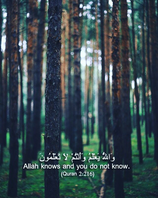 """Perhaps you hate a thing and it is good for you; and perhaps you love a thing and it is bad for you. And Allah Knows, while you know not."" -- Surah Al-Baqarah [2:216]"