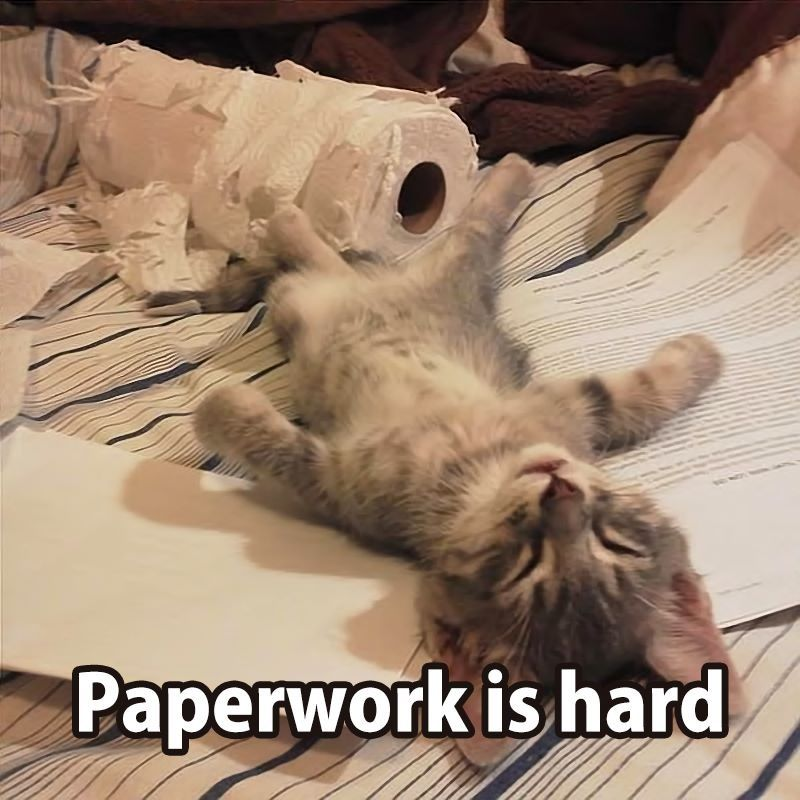 Nap time, after too much paperwork. | Kittens cutest, Cute animals, Cute  cats