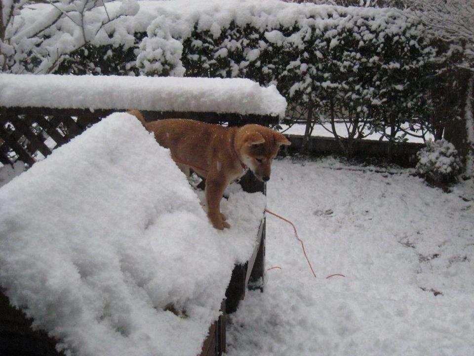 くぅ〜はじめての雪❄