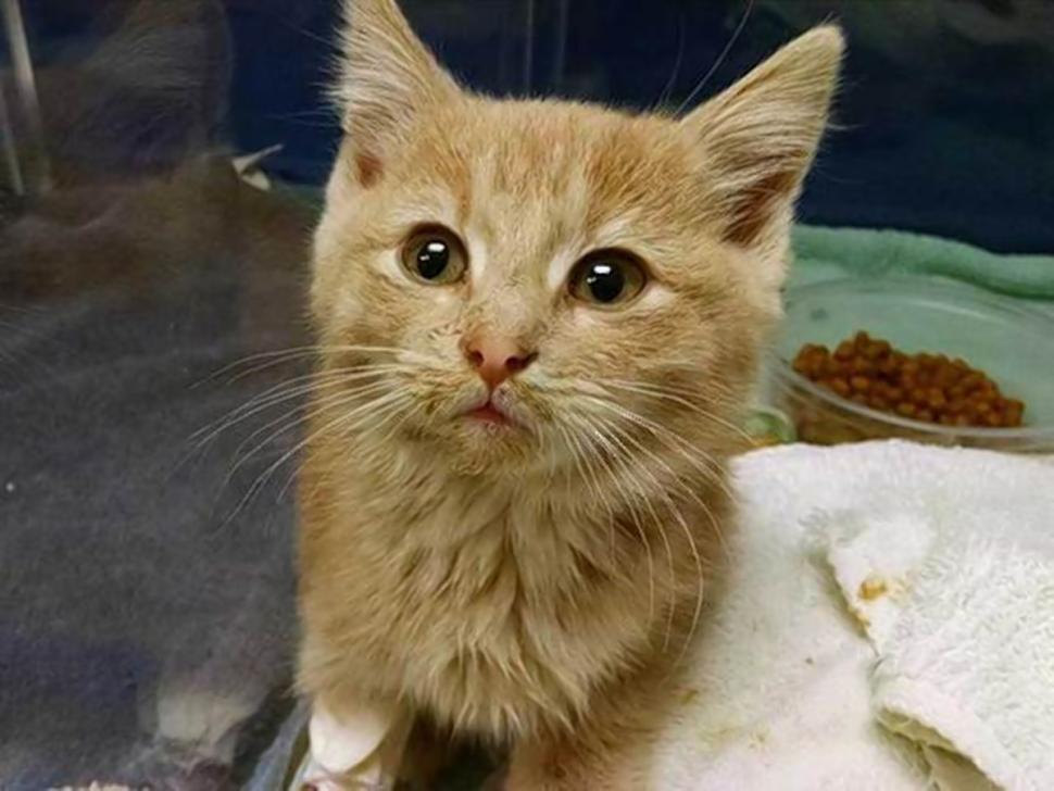 Denver Animal Shelter Won T Let Elsa Go Saves Frozen Kitten Kitten Animals Animal Shelter