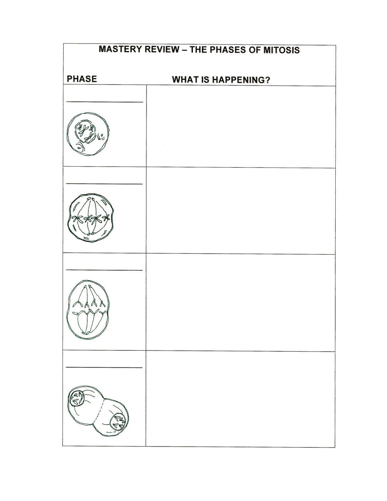 worksheet Phases Of Mitosis Worksheet foldables for science tutor phases of mitosis mastery review graphic organizer