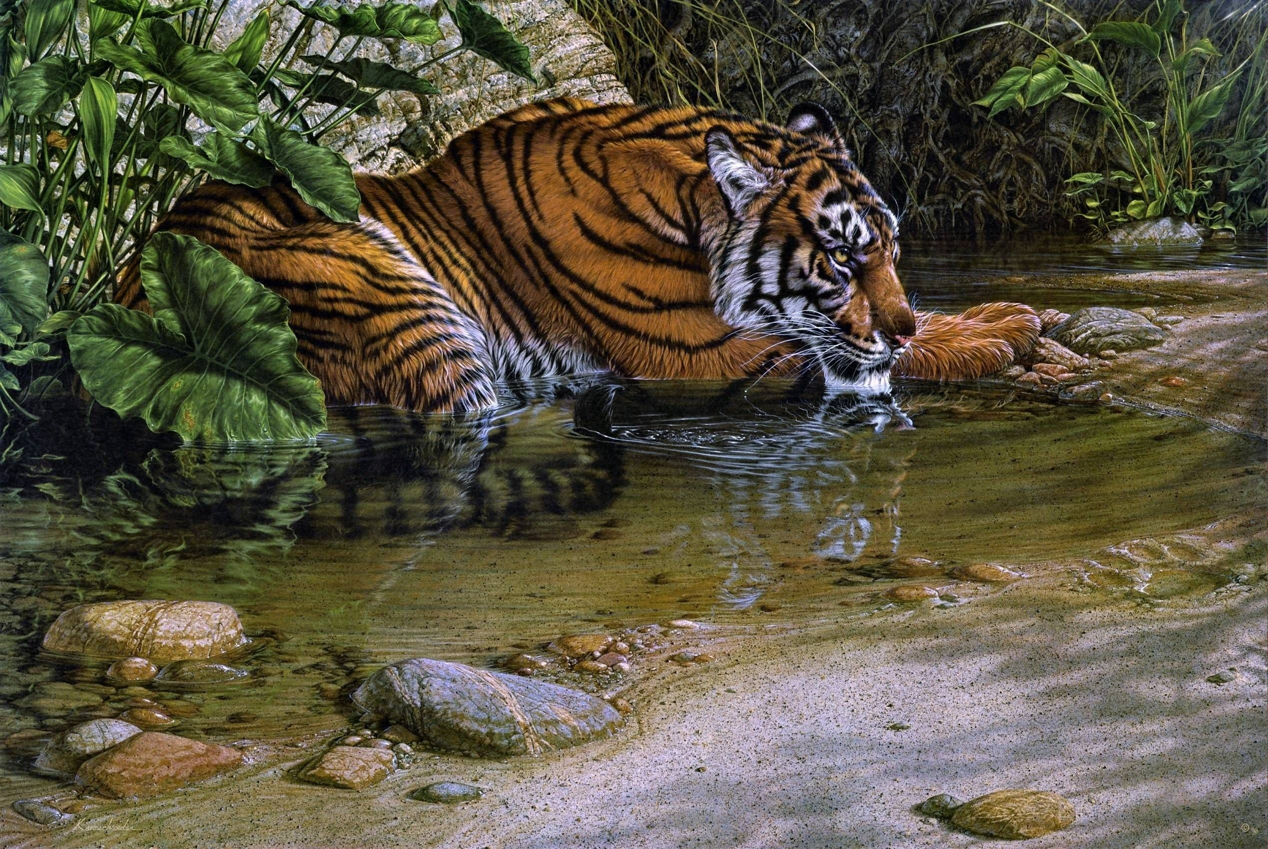 Hd wallpaper jungle - Jungle Animals Real Life Hd Wallpapers