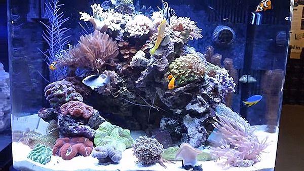 Coralife Biocube 29 Gallon Fish Tank Saltwater Aquarium