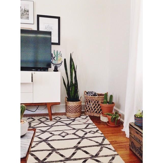 Cacti Corner + Target & Home Goods Baskets